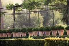 Usines dans des pots, Alhambra, Grenade, Espagne Photo stock