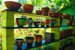 Usines dans des pots de fleur photos stock
