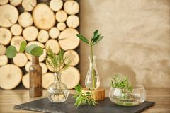 Usines dans différents vases en verre sur la table Photographie stock libre de droits