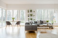 Usines dans l'intérieur naturel d'appartement photos libres de droits