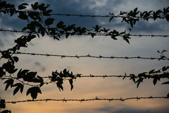 Usines dans la barrière dans Chidambaram, Inde Images libres de droits