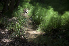 Usines dans la forêt Image stock