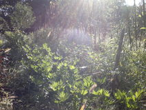 Usines dans la lumière de matin Image stock