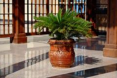 Usines dans le pot en céramique près de l'entrée d'hôtel Photos libres de droits