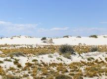 Usines dans les dunes Photographie stock libre de droits