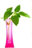 Usines dans un vase rose d'isolement sur le backgroung blanc Photographie stock libre de droits