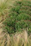 Usines de bourgeonnement de maman rempliées dans la haute herbe Image stock