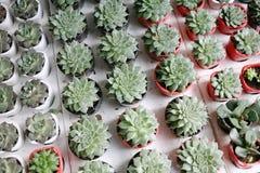 Usines de cactus Photographie stock libre de droits