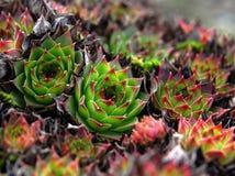 Usines de cactus Image stock
