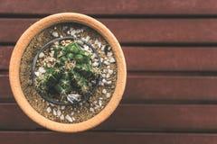 Usines de cactus dans le pot de fleur Image stock