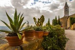 Usines de cactus et petits arbustes sur un mur donnant sur la campagne toscane Photographie stock