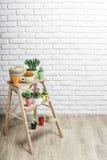 Usines de Chambre, succulents Photos stock