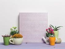 Usines de Chambre, succulents Images stock