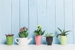 Usines de Chambre, succulents Photos libres de droits