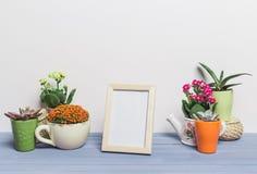 Usines de Chambre, succulents Images libres de droits