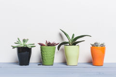 Usines de Chambre, succulents Photo stock