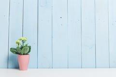Usines de Chambre, succulents Photographie stock libre de droits