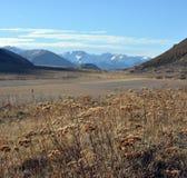 Usines de cigûe dans des Alpes du Nouvelle-Zélande Southen au printemps Photographie stock libre de droits