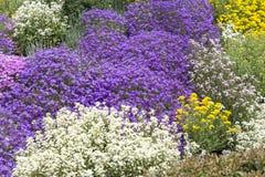 Usines de couverture végétale au printemps Image libre de droits