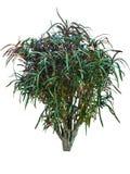 Usines de Croton avec les feuilles colorées vertes Photographie stock