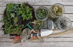 Usines de fines herbes Photo stock
