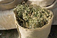 Usines de fines herbes sèches dans des sacs dans des sacs Photographie stock