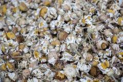 Usines de fines herbes sèches le marché Image stock