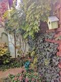 Usines de floraison autour de barrière en bois dans le jardin pendant la saison d'automne images libres de droits