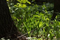 Usines de forêt Photo stock