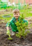 Usines de garçon un arbre de jeune plante image stock