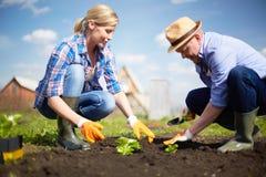 Usines de jeune plante Photographie stock libre de droits