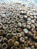 Usines de mer Photographie stock libre de droits