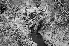 Usines de Milou sur la rivière photos stock