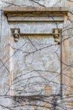 Usines de rampement de plâtre de mur de cadre de texture de fond vieilles Image stock