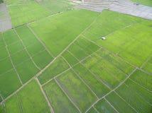 Usines de riz en Paddy Field Images stock