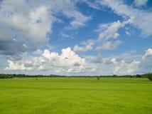 Usines de riz en Paddy Field Photos stock