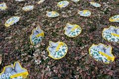Usines de sempervirens d'Iberis à la jardinerie de De Bosrand dans Wassenaar, Pays-Bas Photo libre de droits