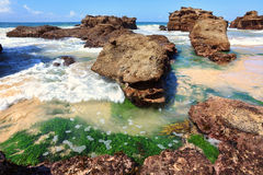 Usines du plancton végétal parmi les roches à marée basse, Australie Photo stock