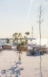 Usines du sud dans les rivages couverts de neige de la Mer Noire dans Pomorie, Bulgarie, hiver Photo stock