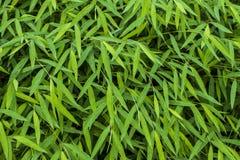 Usines en bambou de jungle de bébé vert électrique de verdure dans le concept de l'ozone d'air frais Photographie stock