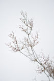 Usines en hiver Images stock