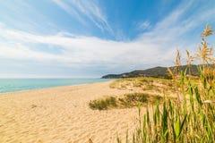 Usines en plage de Solanas Photographie stock libre de droits