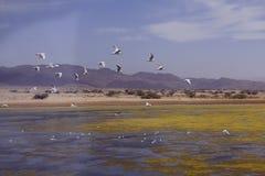 Usines et algue dans le lac de sel près d'Eilat, Israël Images stock