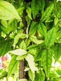 Usines et arbres autour dans le jardin à la maison Photo libre de droits