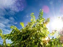 Usines et arbres autour dans le jardin Photographie stock