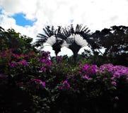 Usines et arbres aux jardins botaniques de la Guadeloupe image libre de droits