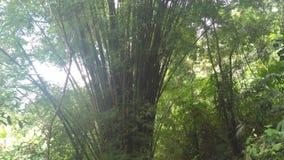 Usines et arbres de Colombie Photographie stock libre de droits