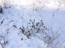 Usines et buissons Photo libre de droits