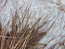 Usines et glace de Brown près de rivière, Lithuanie Image libre de droits