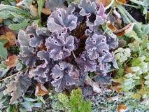 Usines et herbe congelées en automne tôt Photographie stock